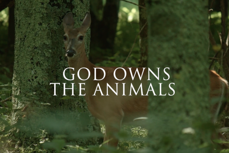 God owns the Animals